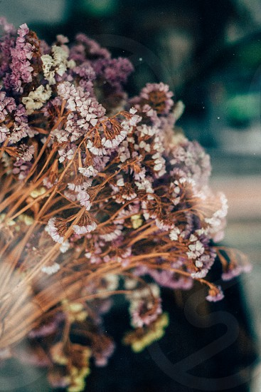 dried flowers glass purple blossom bloom dead dying dry reflect pretty delicate white pink photo
