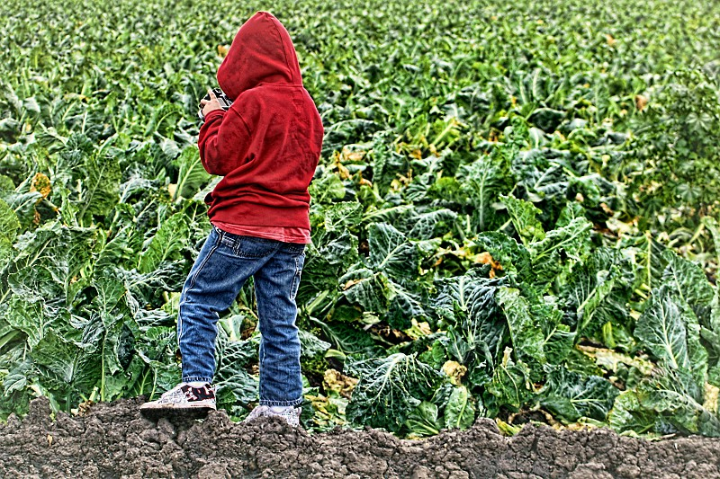 From behind a boy in a red jacket photographs a crop of green cauliflower plants photo