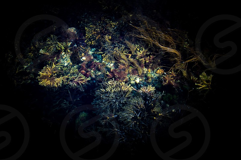 Below the surface water ocean sea plants growth plankton  transparency sea animals photo