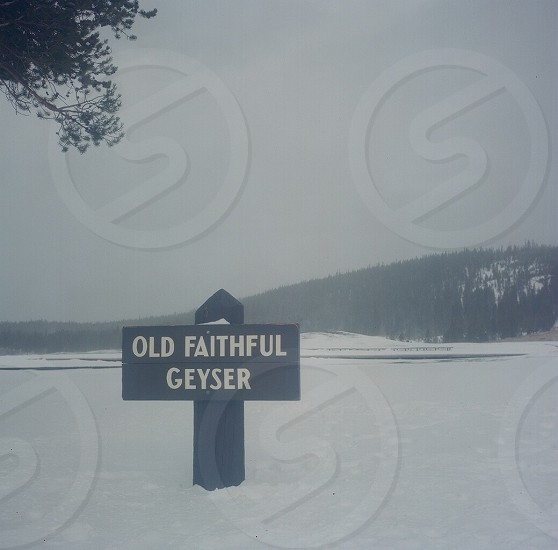 Old Faithful photo
