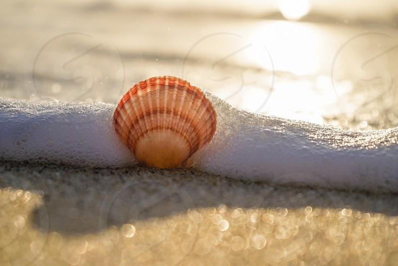 Fan Shell foam wave beach sand water wet photo