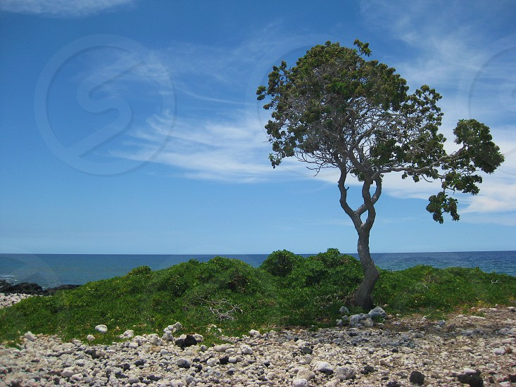 tree and green plants by beach photo