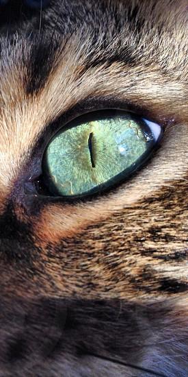 closeup photography of cat's green eye photo