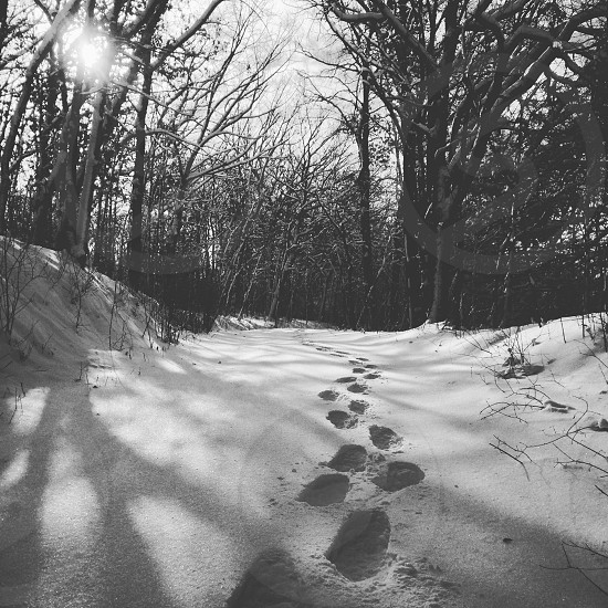 Snowshoeing woods snow outdoors  photo