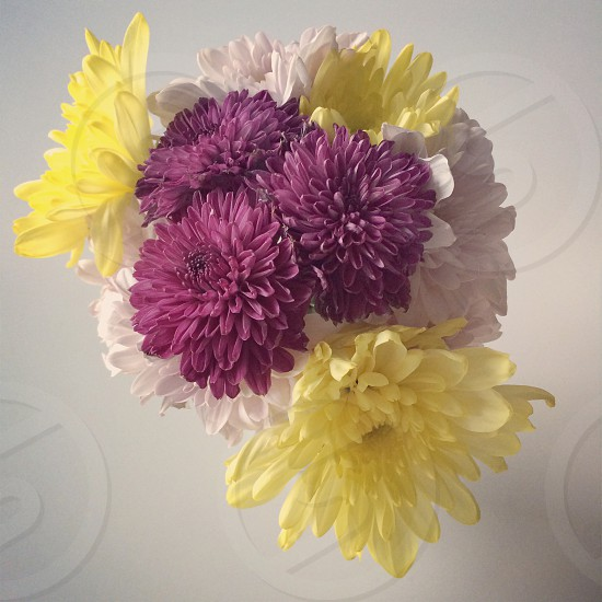 Flower purple yellow vintage  photo