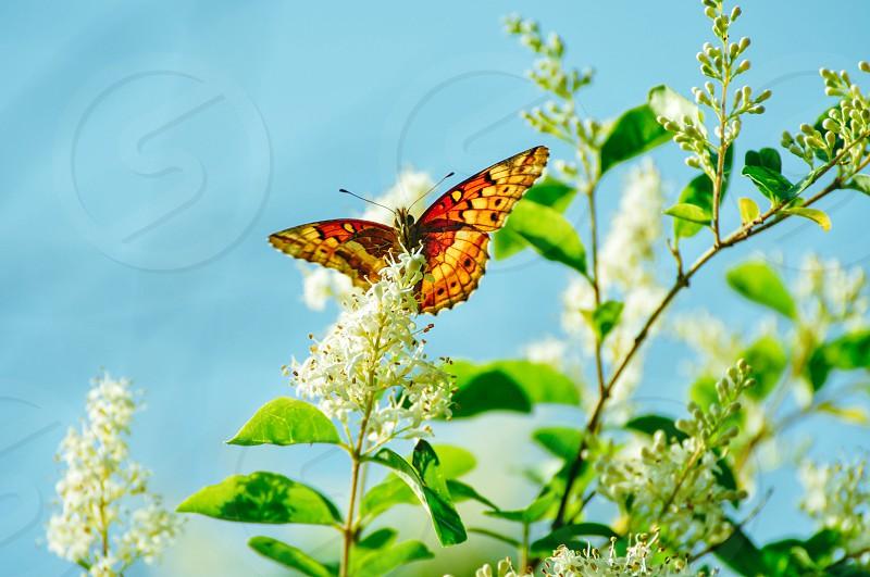Butterflynaturepeacefulvibrantharmonious flowers  photo