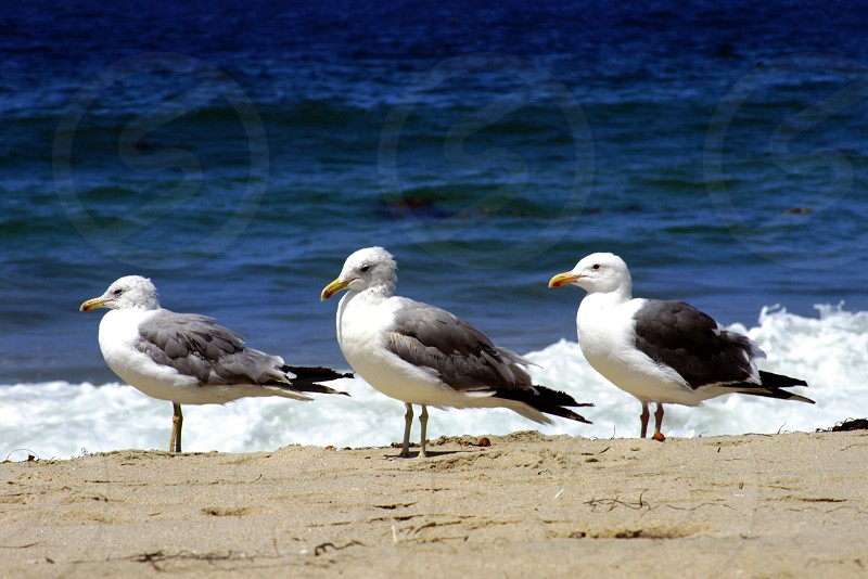 3 seagulls beach photo
