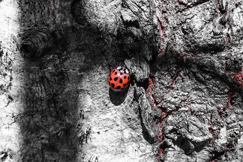 Ladybug on a tree photo
