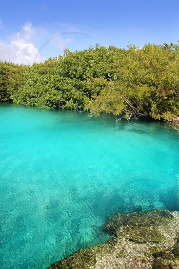 cenote mangrove with clear turquoise water in Mayan Riviera Mexico photo