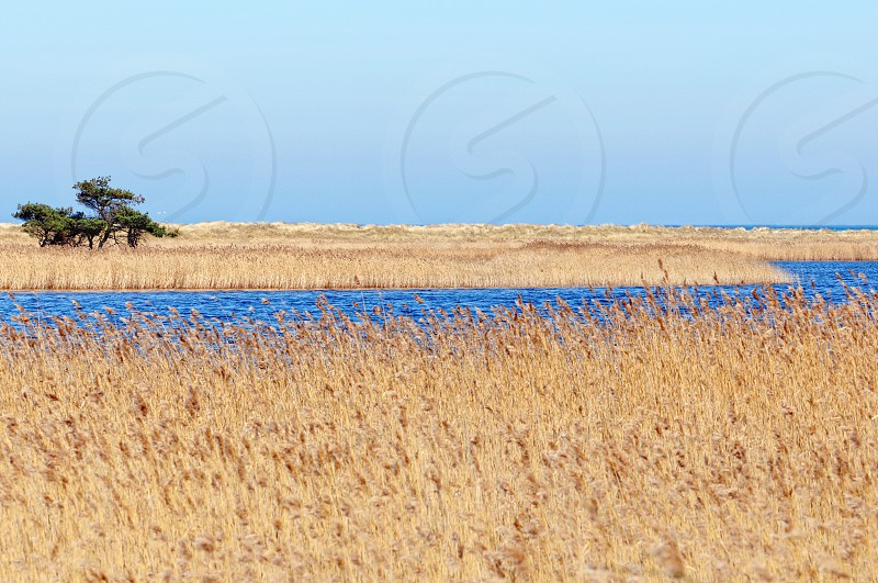Darsser Ort at Baltic sea beach on Darss peninsula (Mecklenburg-Vorpommern Germany). Typical landscape with reed and water. photo