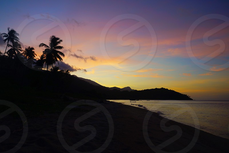 silhouette photo of coconut tree and mountain near boddy of water photo