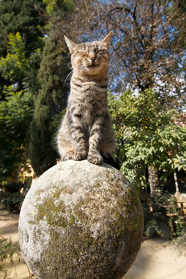 brown tabby cat on round cement photo