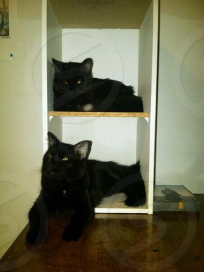 Cat twins neet friends black  photo