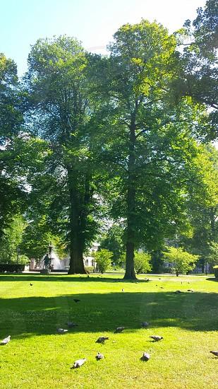 Doves park photo