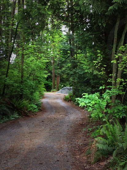 Road in the forest. photo