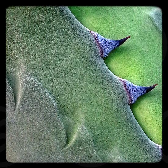 Agave macro detail Phoenix AZ photo