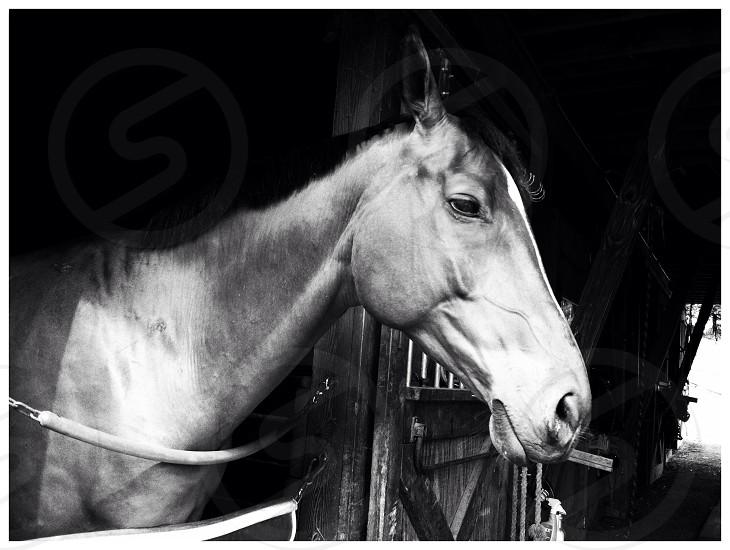 My horse  photo