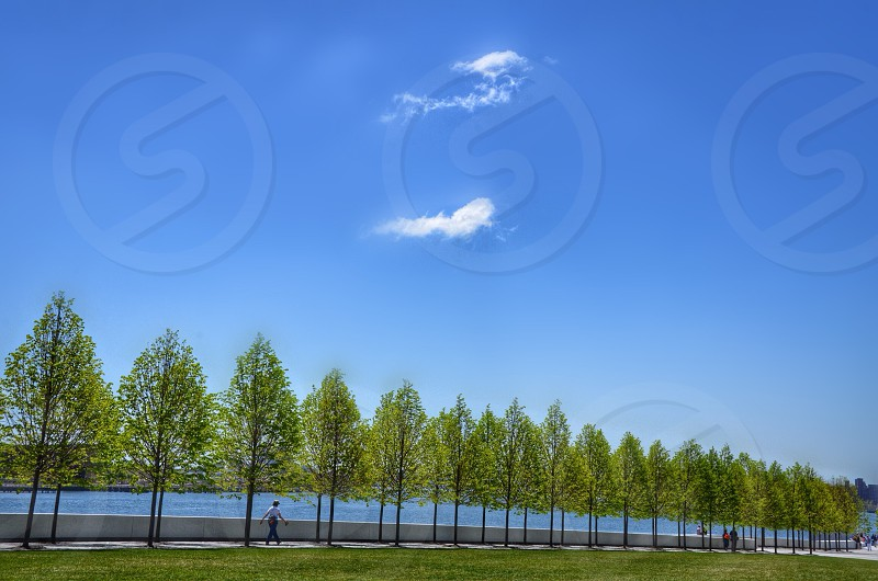 green trees view photo