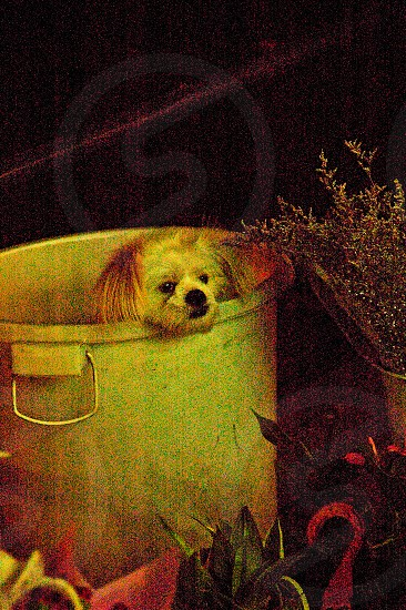 dog in a bucket  ultra high iso setiing simulating a paint photo
