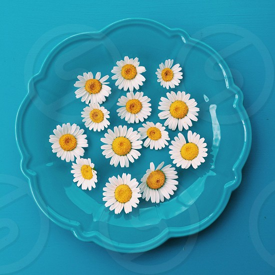 yellow and white daisies on blue decorative plate photo