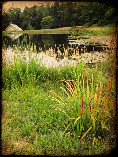 Cattails and a pond with lily pads in Pennsylvania  photo