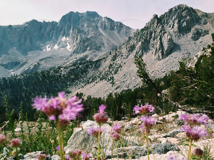 pink daisy flowers on white mountain photo