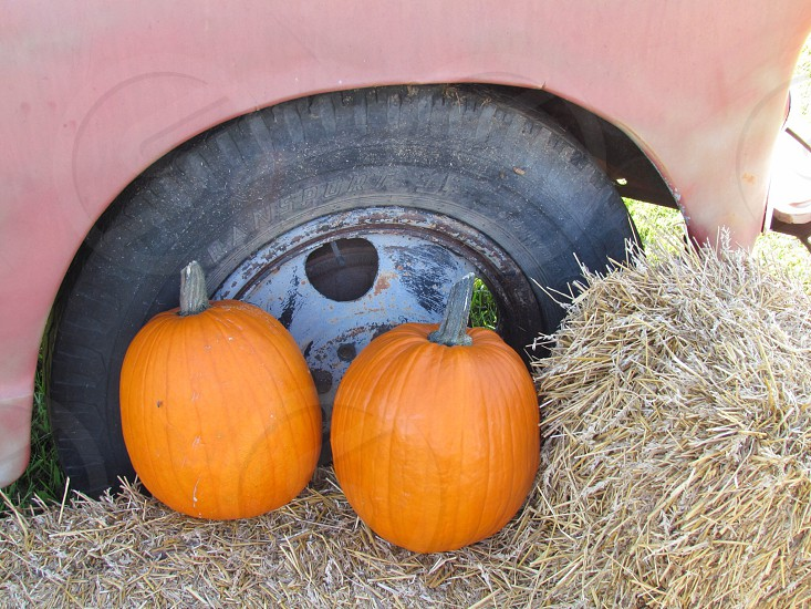 Pumpkin and hay bale decorations placed in front of vintage truck wheel well photo