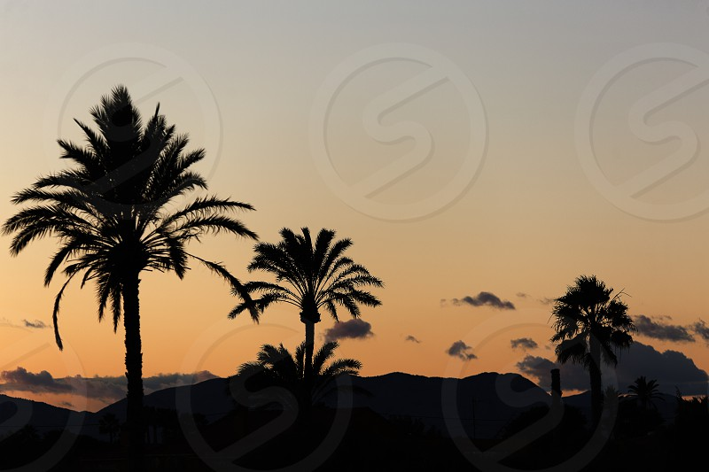 Sunset in Elche with palm trees in the foreground. Horizontal shot photo
