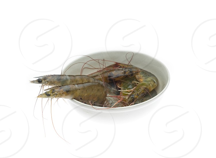 raw fresh alive shrimps on a bowl over white background photo