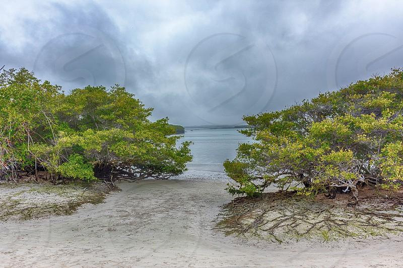 Tortuga Bay photo