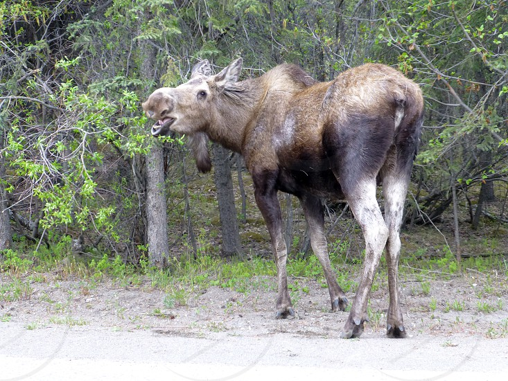 Denali National Park photo