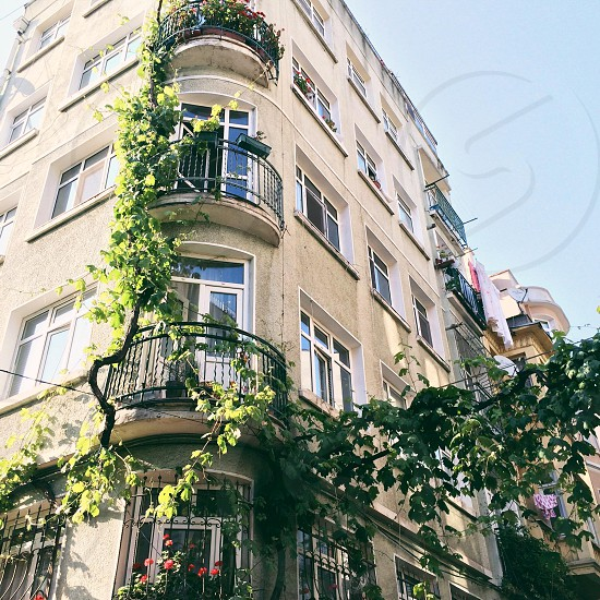 Vines wrap themselves around a building in the Taksim area Istanbul Turkey.  photo