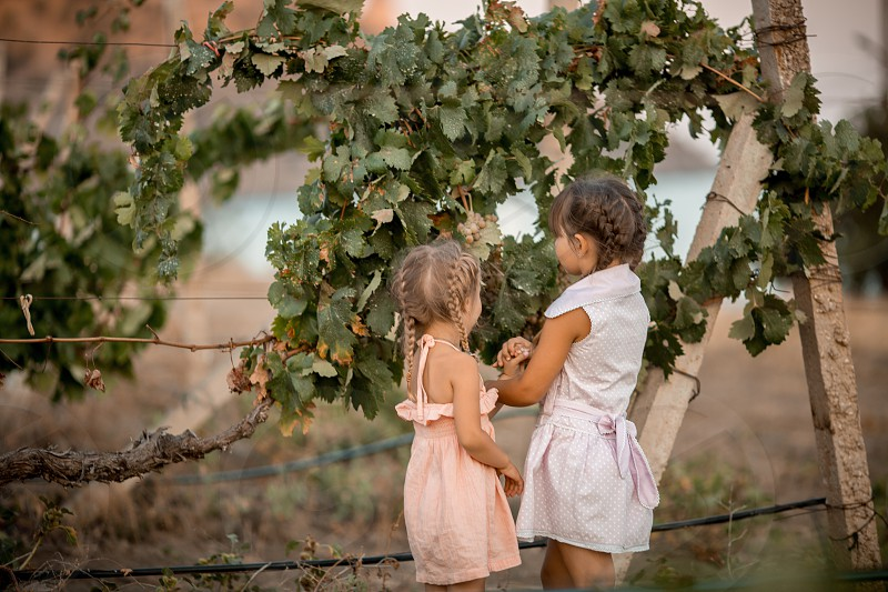 Little sisters on the vineyard  photo