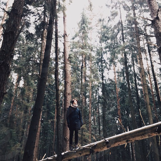 person walking on tree branch photo