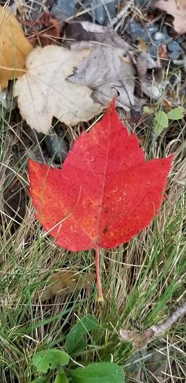 Fall foliage. photo