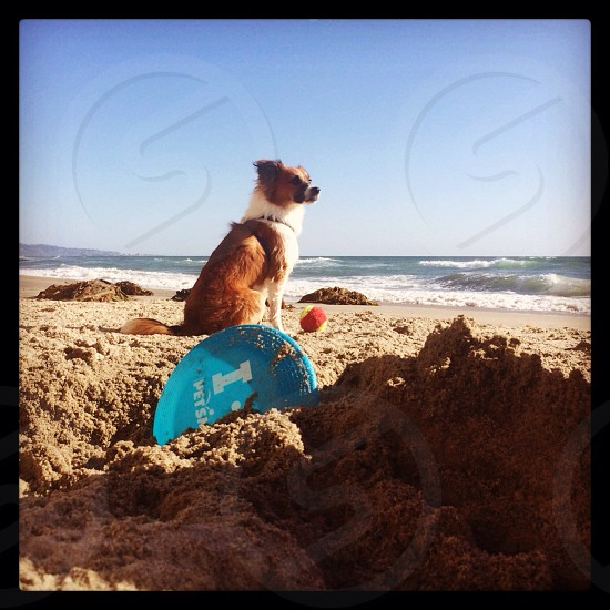 brown and white dog on beach shore photography photo