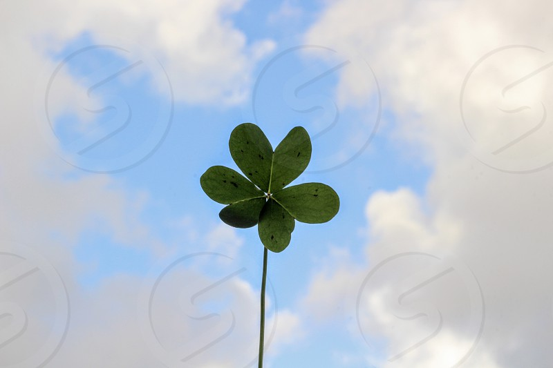 shallow focus photography of green leaf plant under cloudy sky during daytime photo