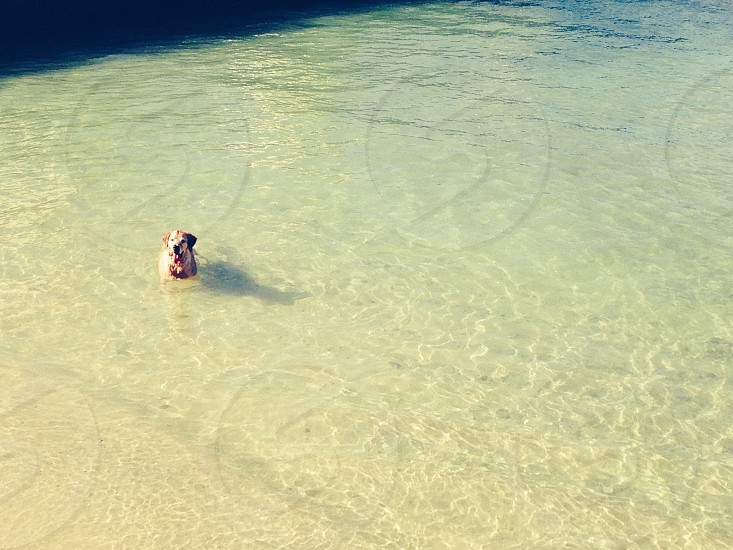 dog swimming in clear water photo
