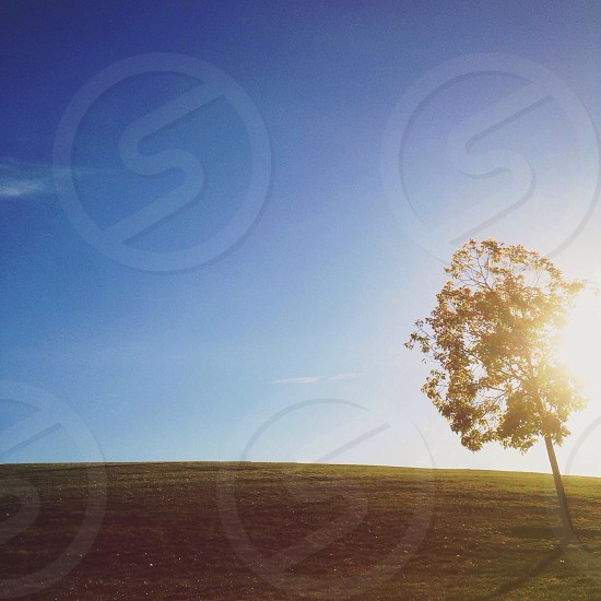 green tree on green grass nature photography photo