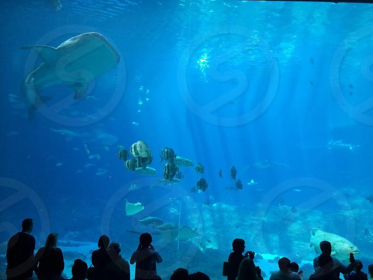 Aquarium fish people weekend learning big lifestyle strangers sea look watch learn photo