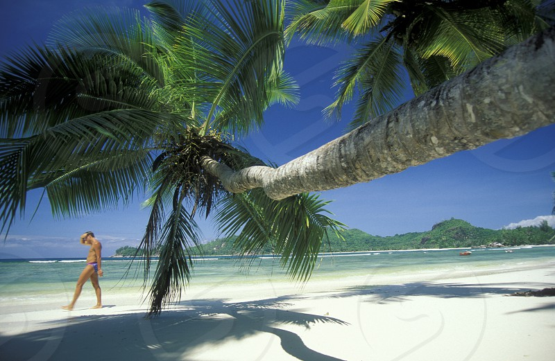 a Beach on the coast if the Island Praslin of the seychelles islands in the indian ocean photo