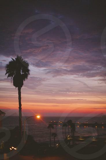 orange sunset across the ocean near palm tree photo