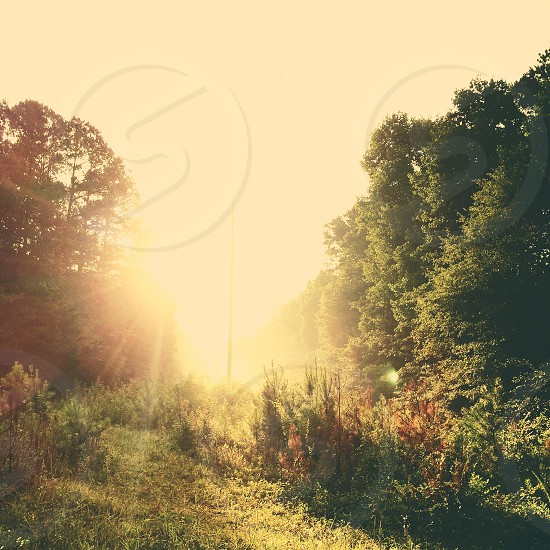 golden hour photography rainforest photo