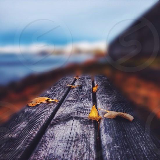 grey wood photo