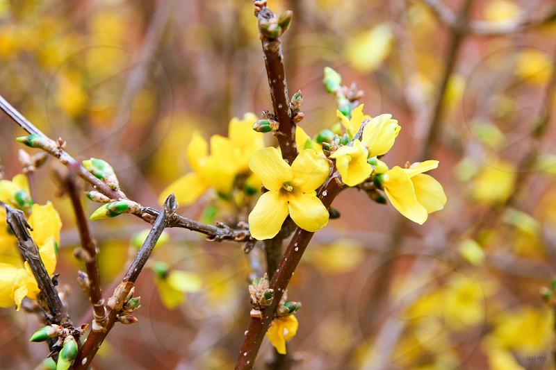 spring colors macro photo
