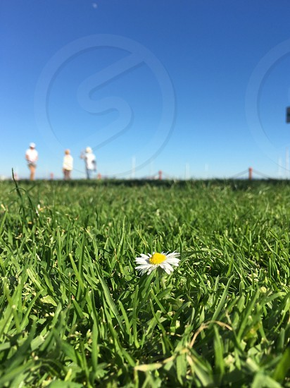 Field white flower weed people blue sky photo
