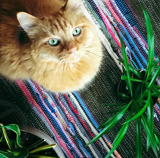 Cat plant feline tabby colorful fluffy photo