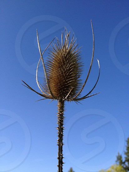 brown spike flower photo