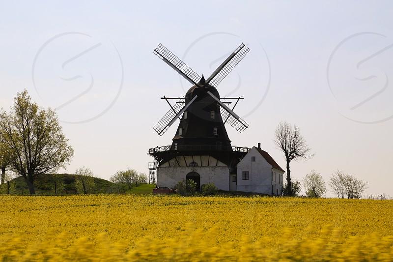 Meditational reflective inspirational field yellow rape rapeseed spring windmill windmills architecture  photo