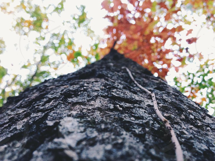 black tree with orange and green leaves photo